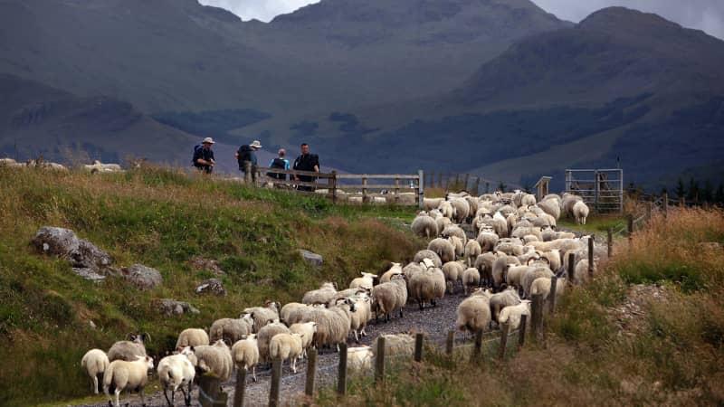 Greenery on the doorstep: The West Highland Way.