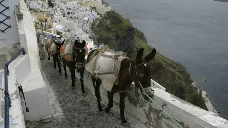 Donkeys are the traditonal means of transportation on Santorini.