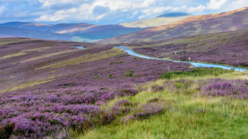 Cairngorms: Britain at its wildest and most beautiful.