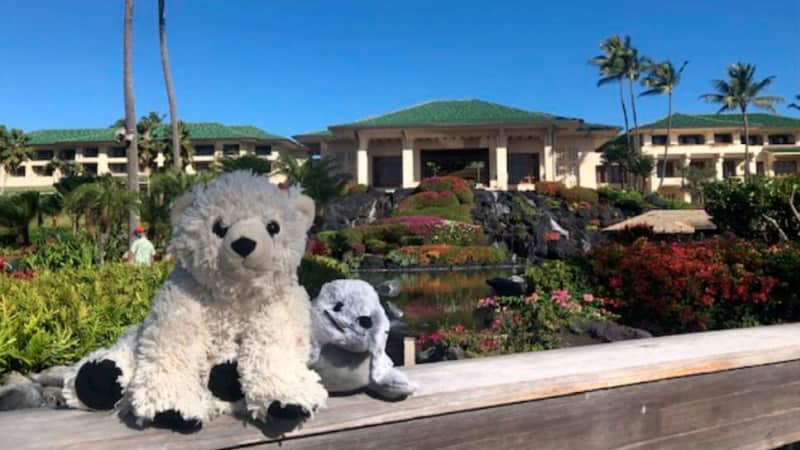 Lost-Teddy-Bear-4-walking-resort