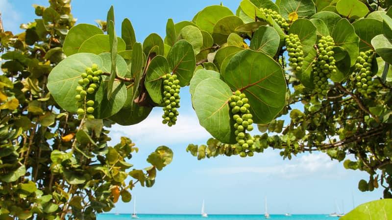 Lush vegetation frames the island's hundreds of beaches.