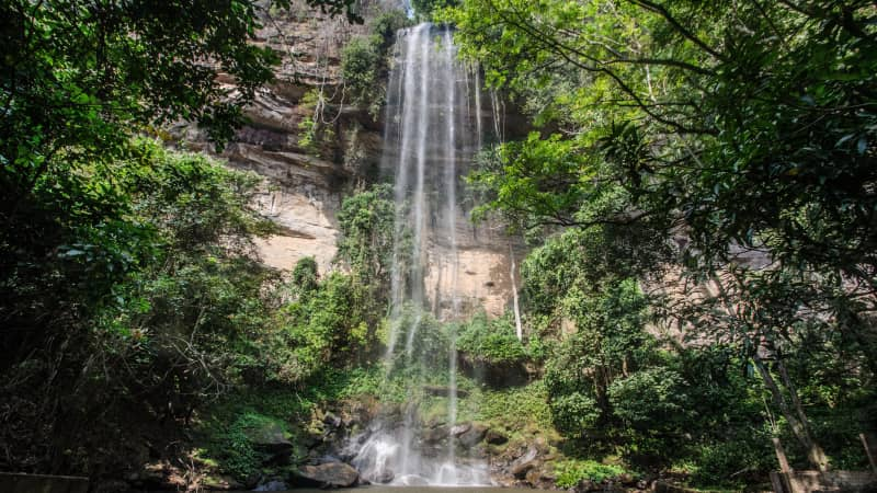 Powerful rivers flow through the forests of Fouta Djallon.