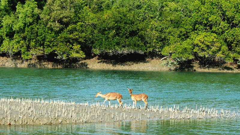 The West Bengal Sundarbans is the world's largest mangrove forest of its kind.