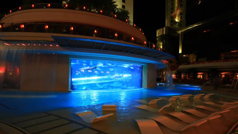 This pool's shark tank is not for the faint of heart.