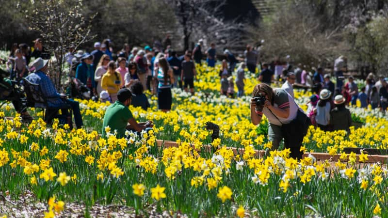 Daffodil Hill tourist attraction in California