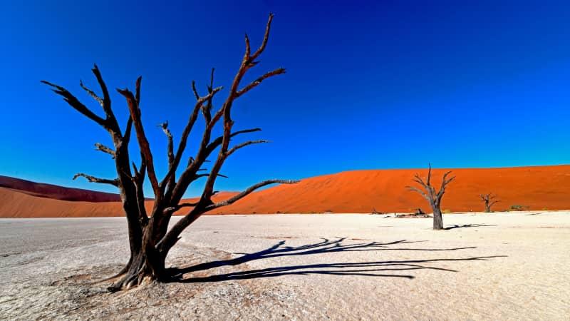 Dead remains of an acacia tree provide a stark image at Namib-Naukluft National Park.