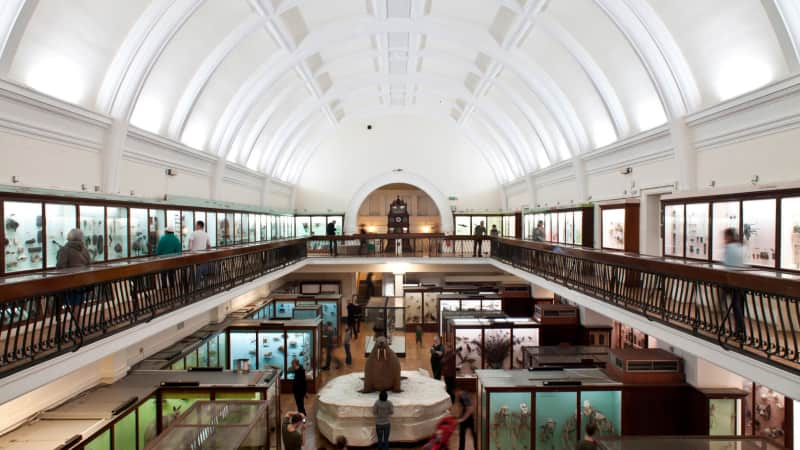 A bloated taxidermied walrus has for over a century been the centerpiece of the Horniman Museum and Gardens, which displays anthropological oddities.