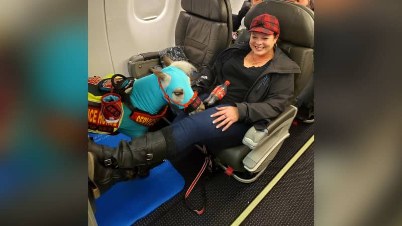 Ronica Froese and her service miniature horse, Fred, flying first-class.