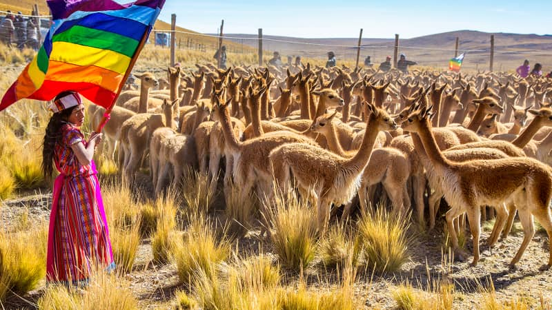 The pair attended the annual Chacu festival in Peru during which wild vicuna are rounded up to be sheared.
