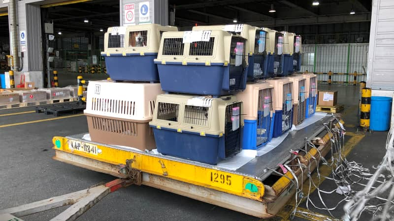Dogs depart South Korea and prepare for a long flight to the US where they hope to be rescued.