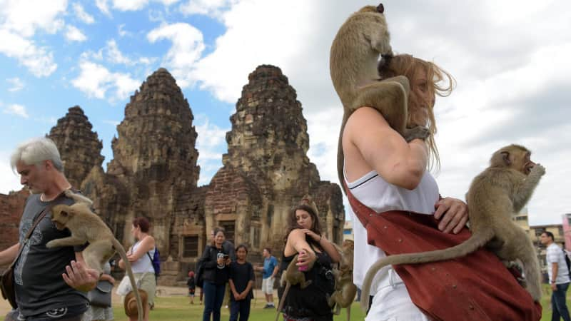 "Monkeys jump onto tourists during the annual ""Monkey Buffet"" in Lopburi on November 27, 2016."