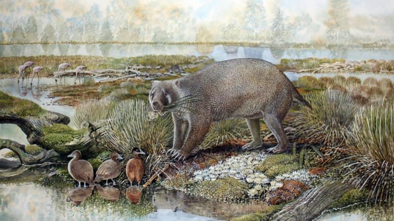 An artist's impression depicts the wombat-like marsupial Mukupirna nambensis.