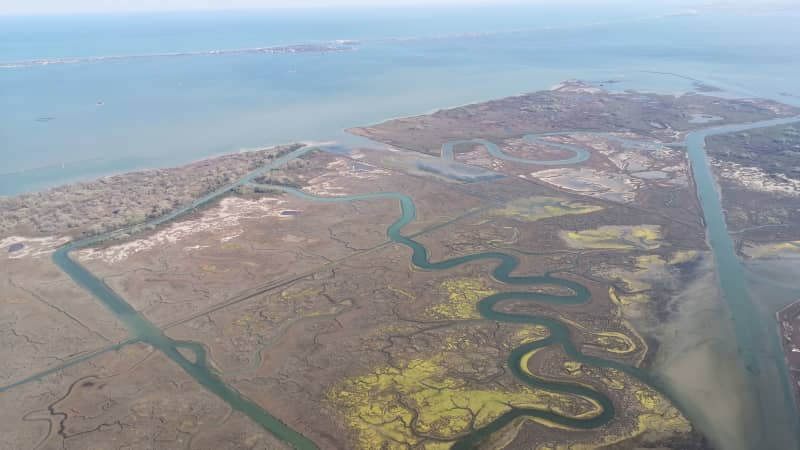 Venice's saltmarshes have halved in the past century.