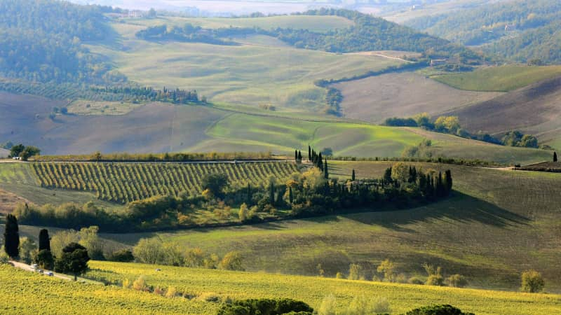 This picture shows a view of a vigneyard (C) in the Val D'Orcia region, in Tuscany, near the village of Pienza on October 10, 2008. The Val D'Orcia, which extends from the hills south of Siena to Monte Amiata was added to the UNESCO list of World Heritage Sites. AFP PHOTO/ Filippo MONTEFORTE (Photo credit should read FILIPPO MONTEFORTE/AFP via Getty Images)