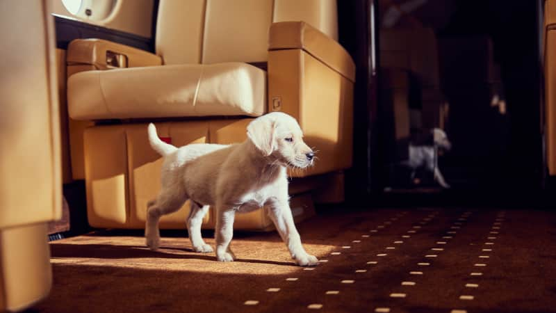 Global private aviation company, VistaJet has recorded an 86% rise in pet travel over the past two years.