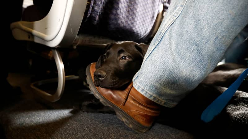A number of commercial airlines have banned emotional support animals from flights in the past year.