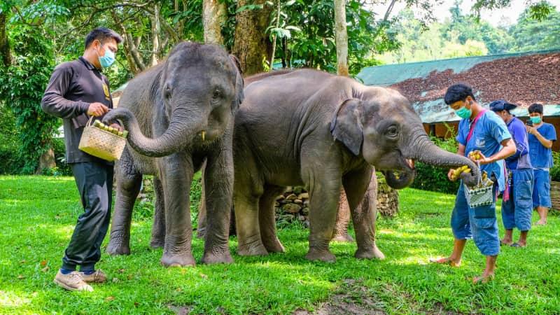 Chiang Mai's Masea Elephant Conservation Park.