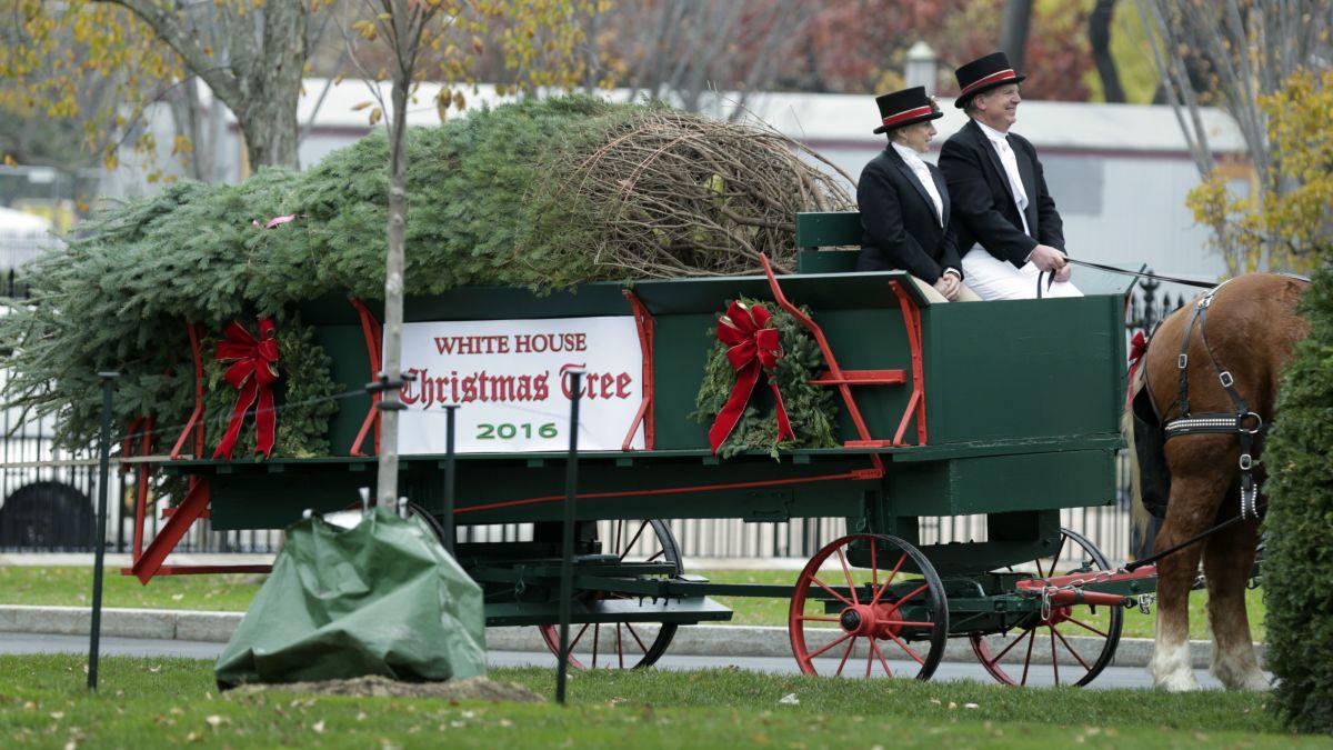 Watch National Christmas Tree Lighting 2020 Cnn FLOTUS welcomes the White House Christmas tree   CNNPolitics