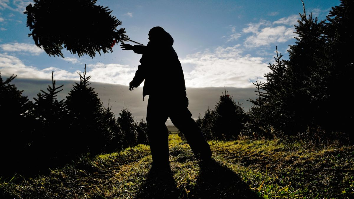Watch National Christmas Tree Lighting 2020 Cnn Why are fewer Christmas trees growing in the US? Blame the Great