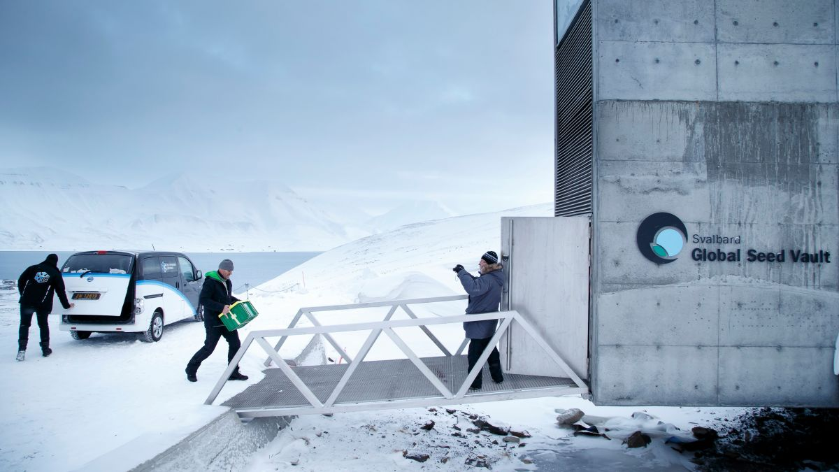 Arctic Doomsday Vault Seeks To Protect World S Most Precious