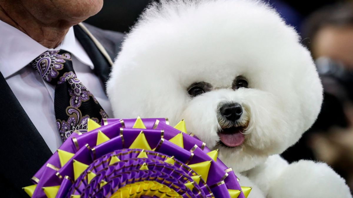 Westminster Dog Show 2020 Dates.Westminster Dog Show Fast Facts Cnn