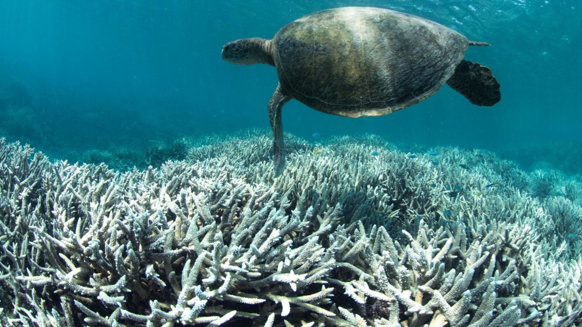 Study Great Barrier Reef Losing Its Ability To Recover From