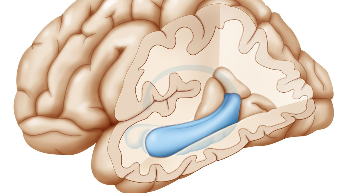 This part of the brain holds the key to Ford's memory