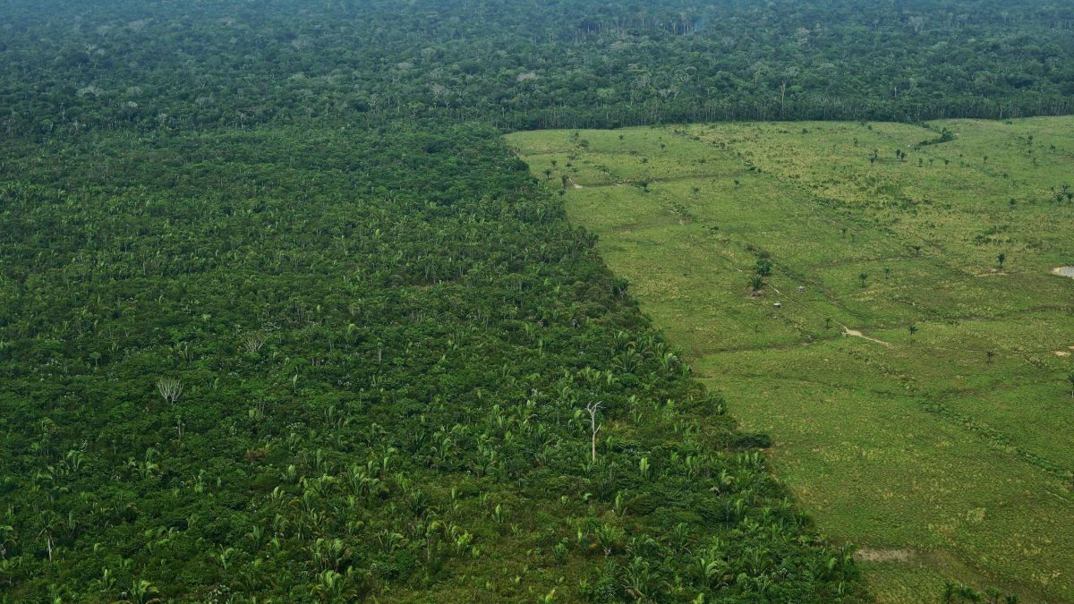 Amazon Destruction Accelerates 60 To One And A Half Soccer Fields