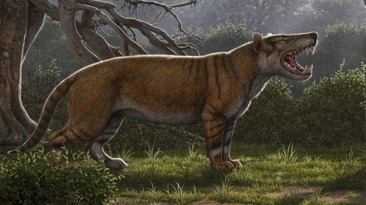 Researchers identify largest carnivorous mammals ever to live on land - CNN