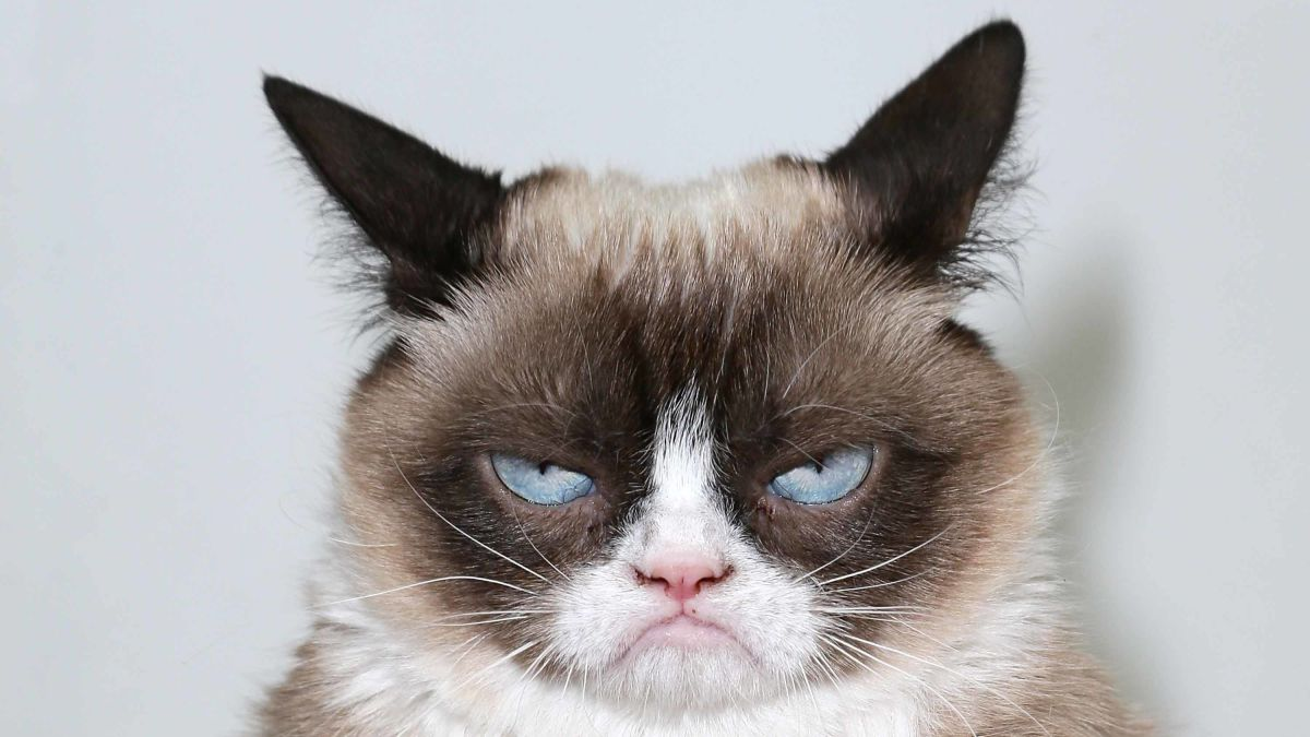 Grumpy Cat, the internet's most famous cat, dead at 7 - CNN