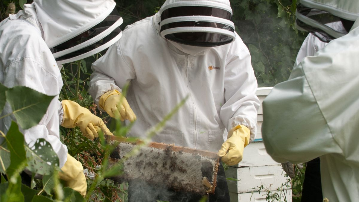 c660f84de This Chicago business trains former inmates to be beekeepers - CNN