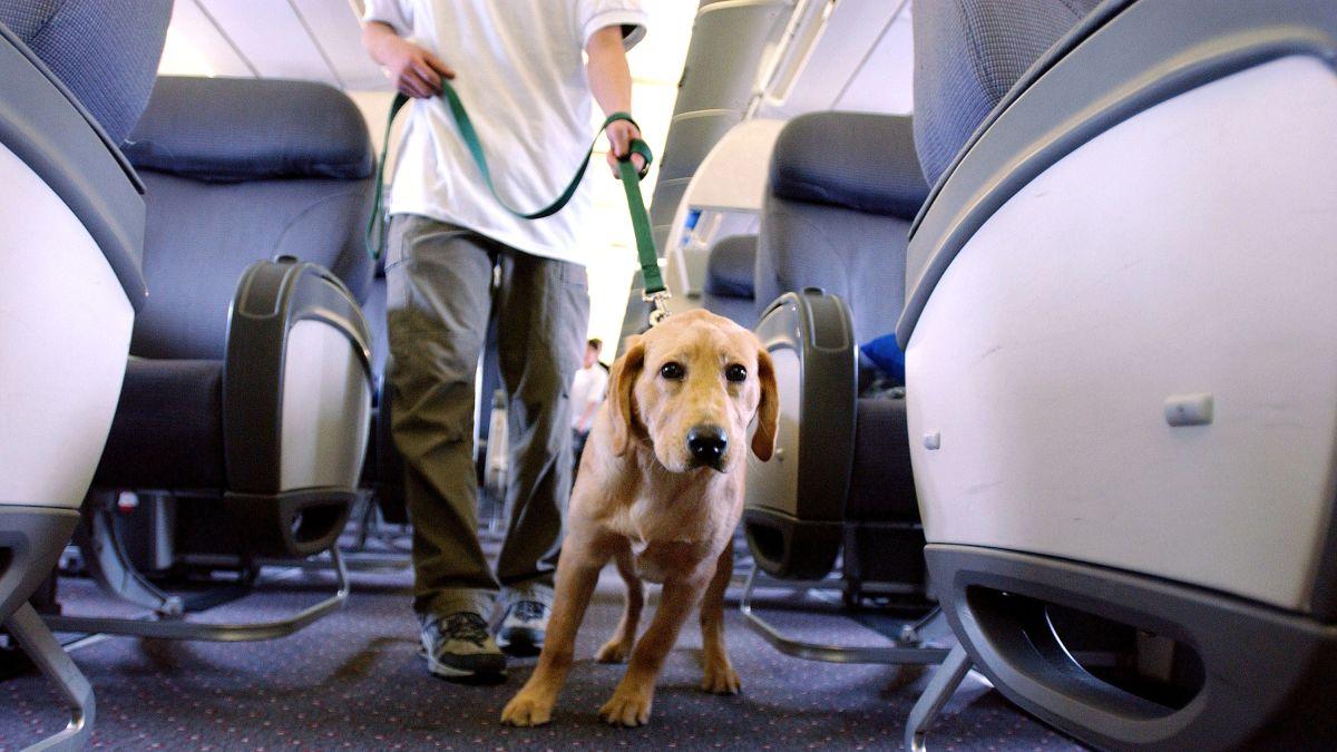 Resultado de imagen para DOT new policies Animals Emotional Support