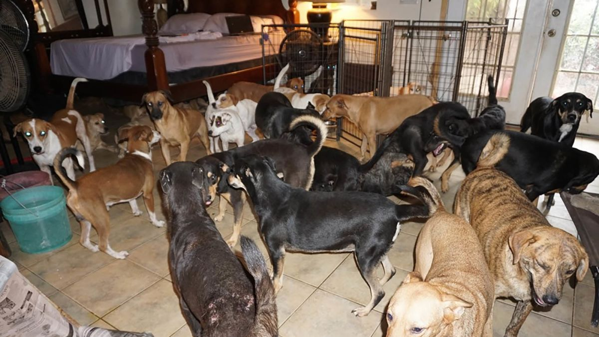 a nassau woman takes in almost 100 dogs who had nowhere to