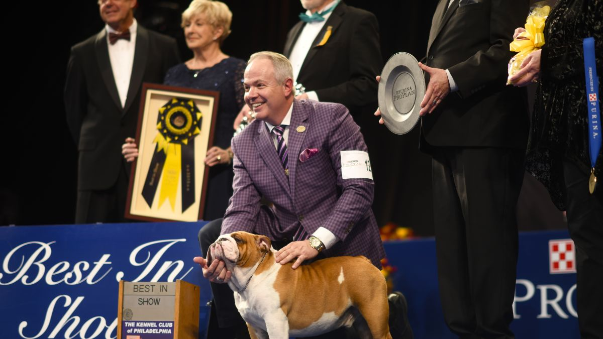 Purina National Dog Show 2020.National Dog Show Winner Thor The Bulldog Takes Home Top