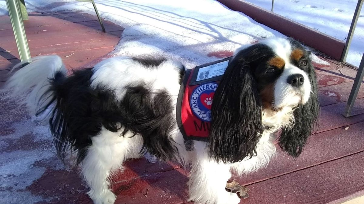 A Therapy Dog Won The May Race In