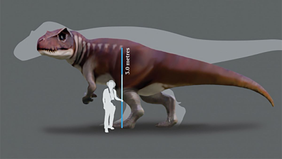 Huge Carnivorous Dinosaurs Lived In Australia Scientists Discover