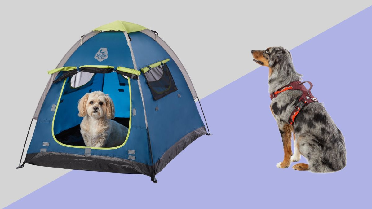 Keep Your Summer Fun Pet Safe And Pet Friendly With Top Outdoor Pet Gear Cnn Underscored