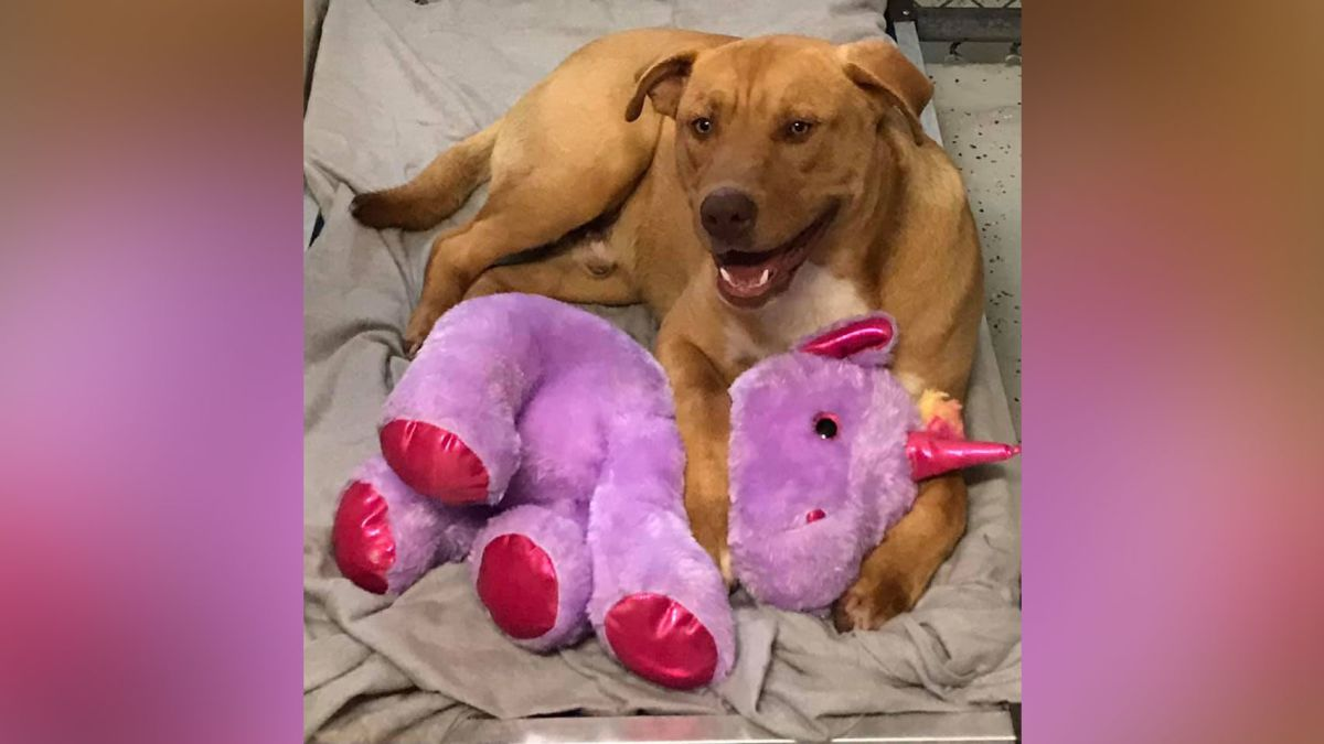 A stray dog kept stealing a stuffed unicorn from a Dollar General, so animal control bought it for him - CNN