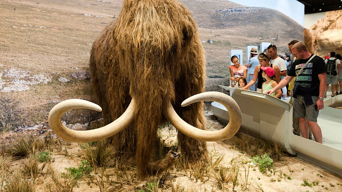 Scientists want to resurrect the woolly mammoth. They just got $15 million  to make it happen - CNN