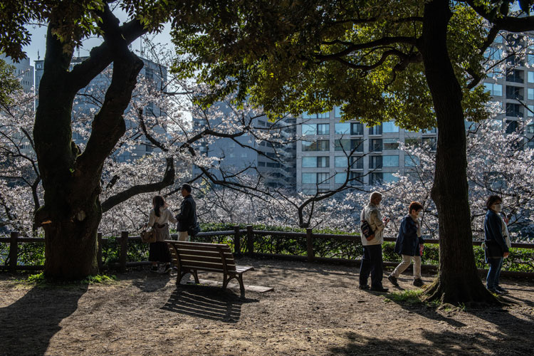 People enjoy blossoms during cherry blossom season on March 26 in Tokyo, Japan.