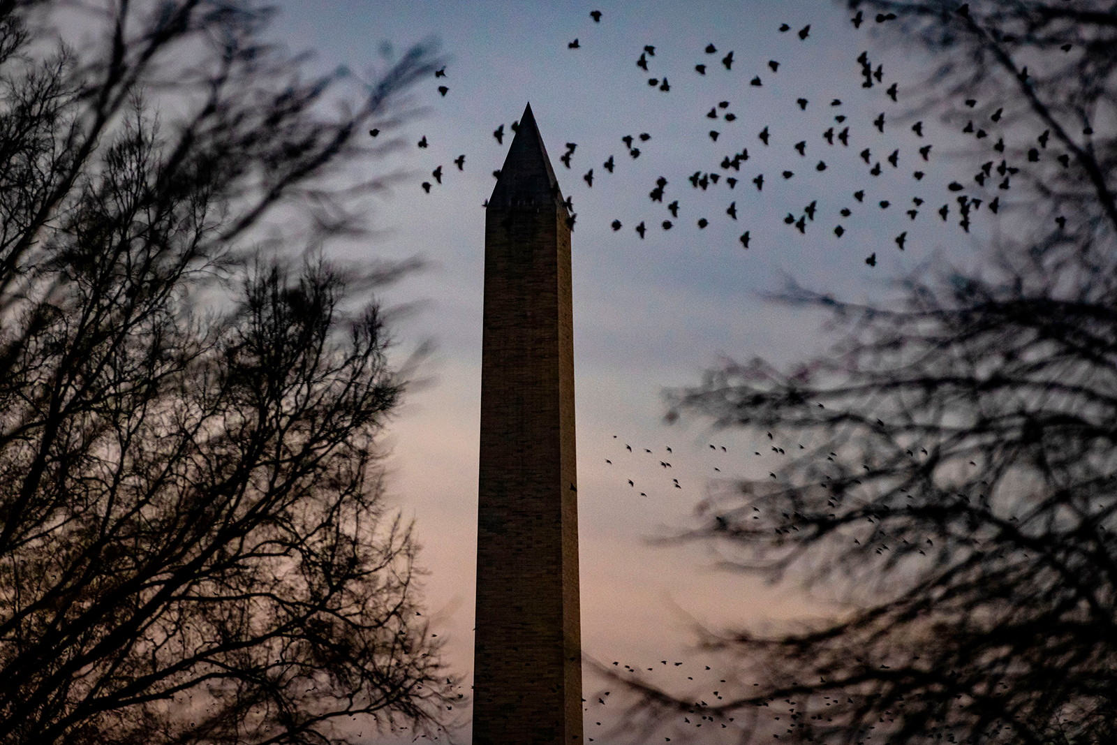 The Washington monument is seen past flocks of birds from the North Lawn of the White House as the sun sets in Washington, DC on December 21.