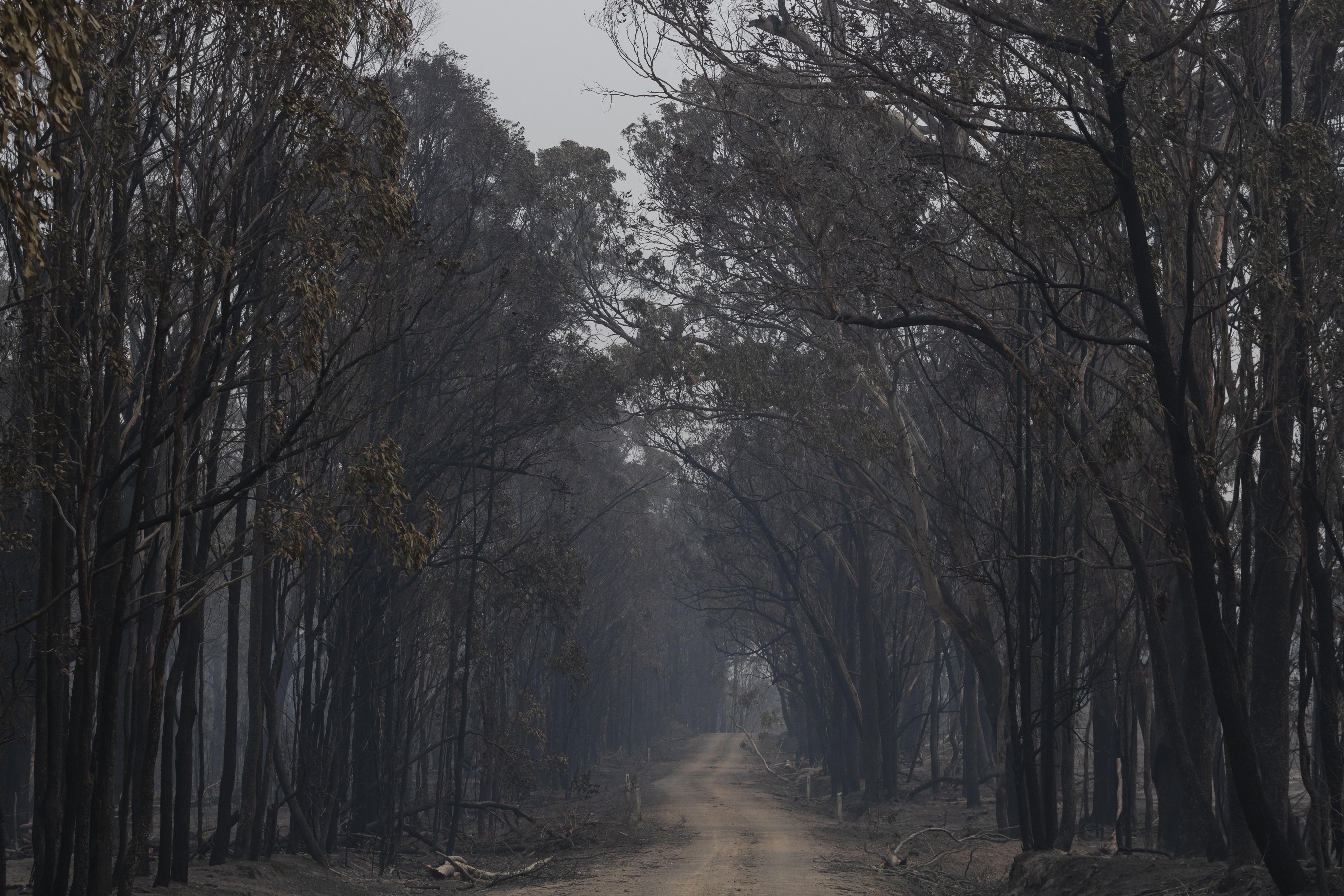 Fire damage on November 11, 2019, in Glen Innes, Australia.