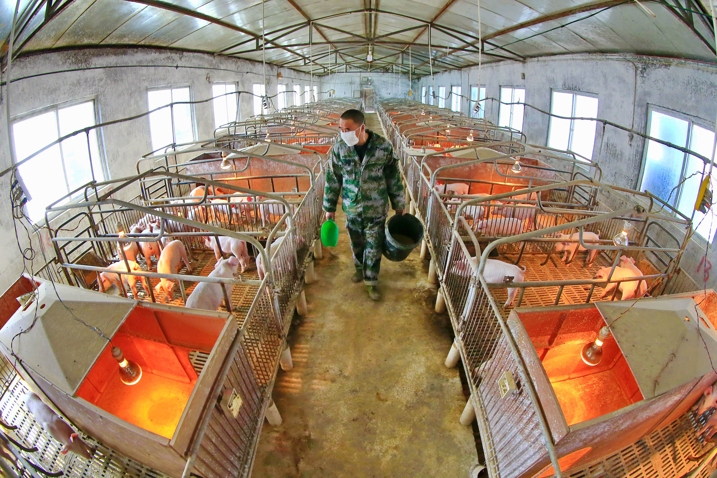 A worker feeds the piglets in a hog pen in southwest China's Sichuan province on February 21.
