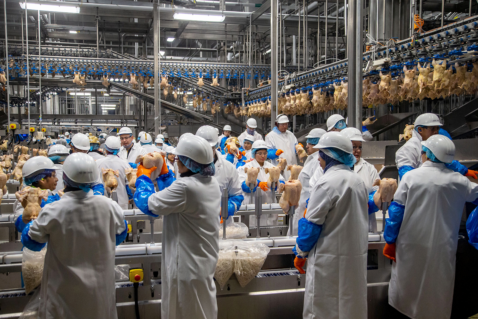 Workers process around 200,000 chickens a day for Costco at the Lincoln PremiumPoultryplant in Fremont, Nebraska on February 27.