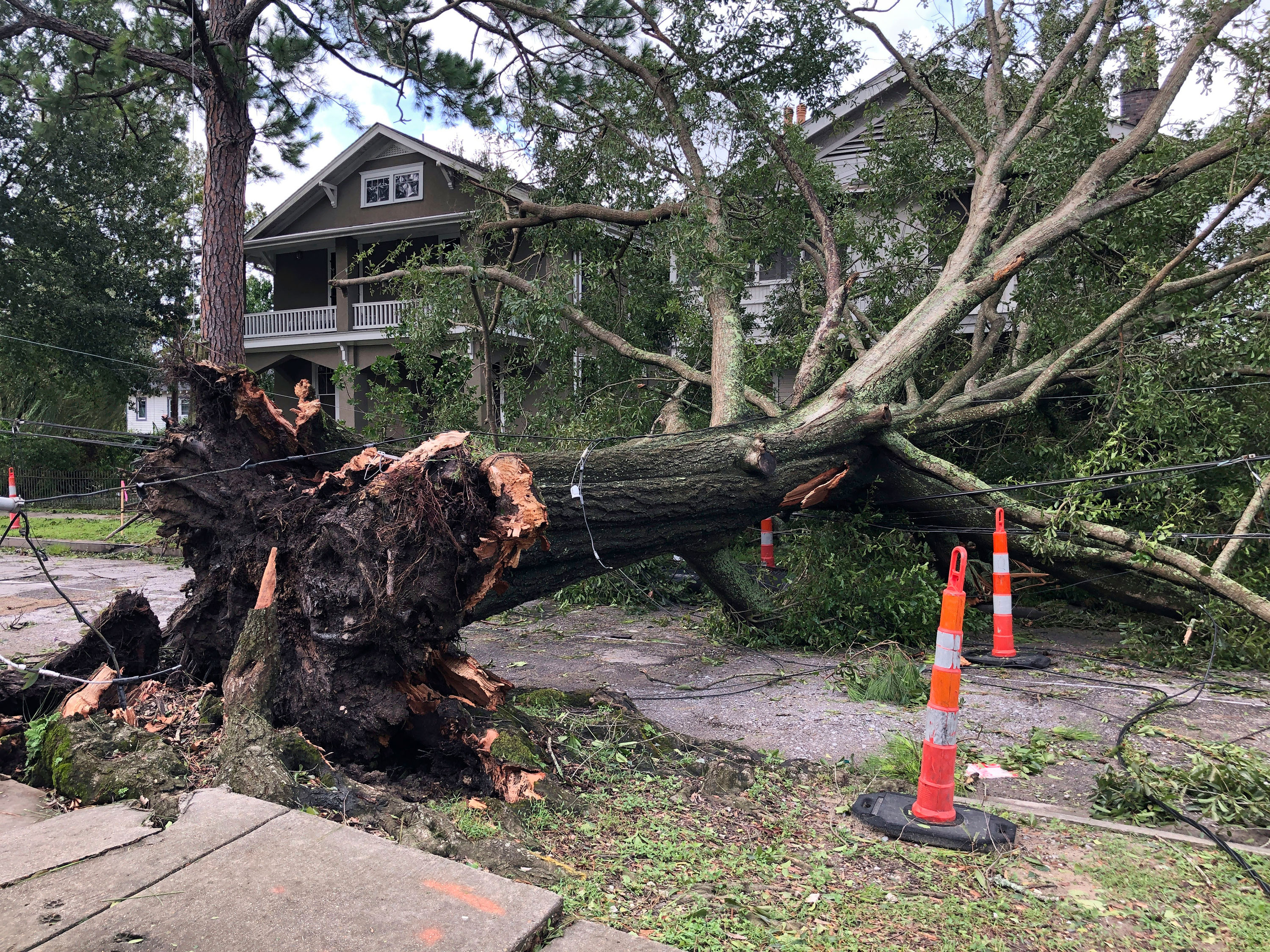 A massive oak tree stretches across a street in New Orleans.