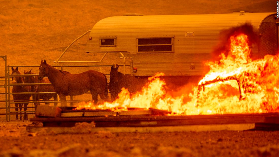 Horses stand in an enclosure Tuesday as the LNU Complex fires tear through the Spanish Flat community in unincorporated Napa County.