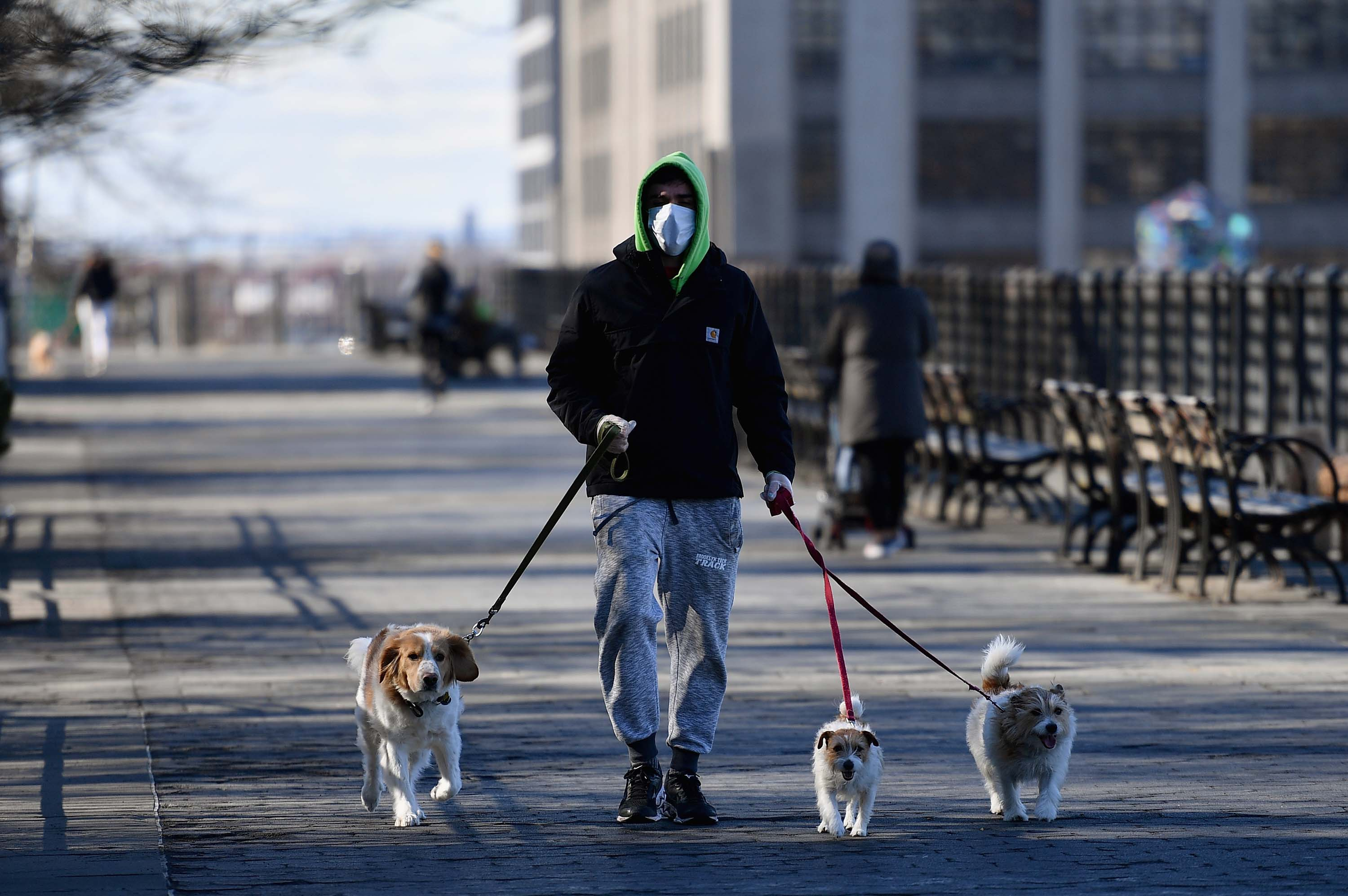 A man wearing a face mask walks dogs on March 24 in New York City.