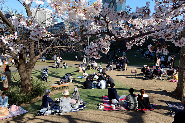 "Groups gather to celebrate the beginning of the cherry blossom season with traditional ""hanami"" parties on March 20, 2020 in Tokyo, Japan."