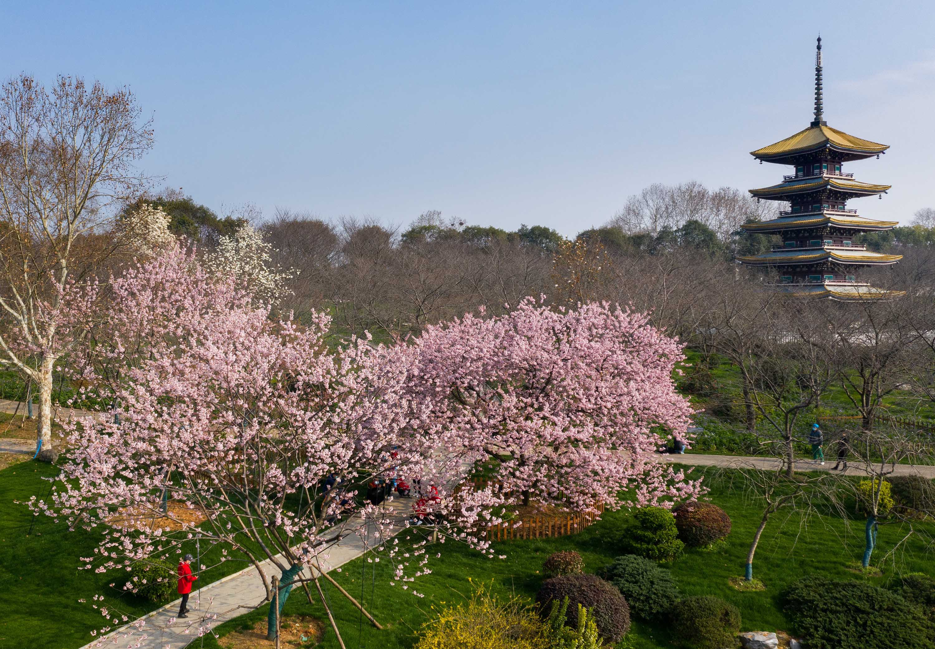 A group of medical staff workers take photos amid cherry blossoms at Moshan cherry garden in Wuhan on March 5.