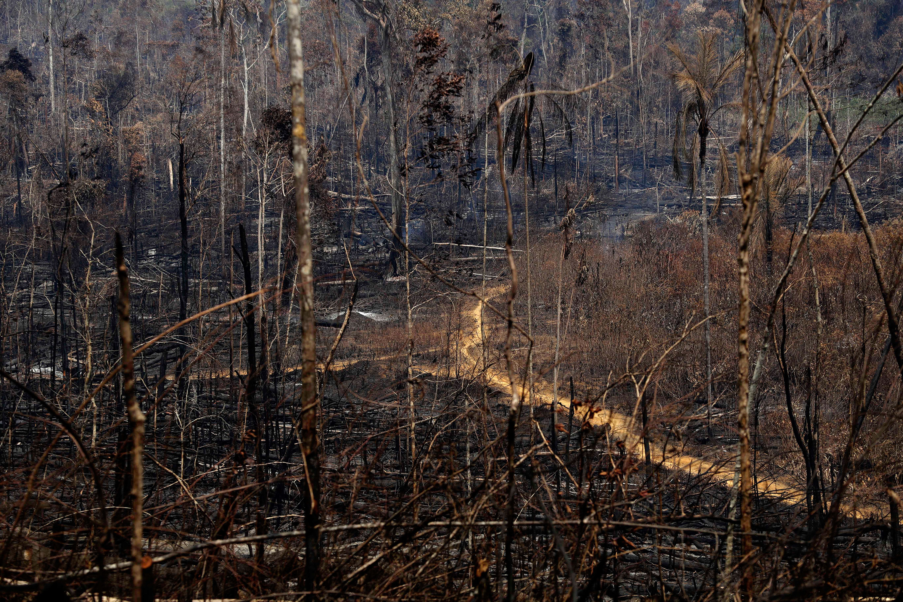 The Amazon has been burning at the highest rate since 2013.